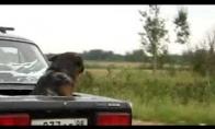 Vipinis šuniukas