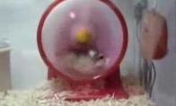 Turbo žiurkėnas