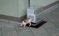 Liftas katėms