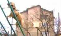Parkūro šuo