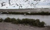 Paukščių lesinimas