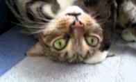 Išprotėjusi katė