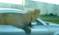 Rusiškas Jaguaras
