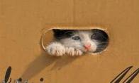 Kačių pakavimas