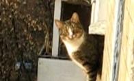Parkūro katinas
