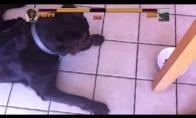 Muštynės: šuo prieš vabalą