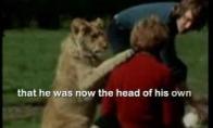 Prijaukintas liūtas Kristijonas