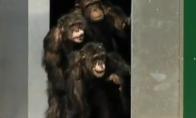 Šimpanzės pamato saulės šviesą