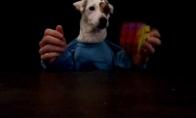 Šuo, išsprendęs kubiką rubiką