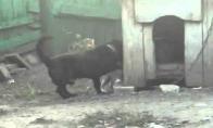 Šuo VS Katė