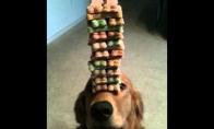 Paklusnus šuniukas