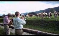 Koncertas karvėms