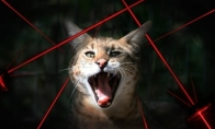 Didelės katės prieš lazerius