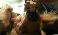 Paklusnus šuo 2