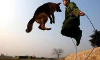 Šuniukų šokdinimo rekordas