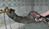Nelaimė vonioje