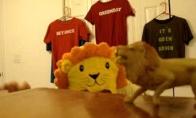 Pensininkas liūtas karalius