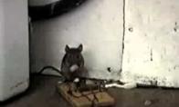 Laiminga pelytė