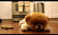 Labanakt šuniukams