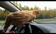 Višta vairuotoja