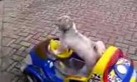 Šuo vairuotojas