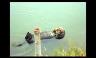 Relaksuojanti ūdra