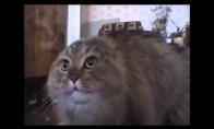 Nononono limit katinas
