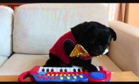 Mopsas pianistas