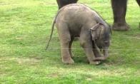 Pirmi drambliuko žingsniai