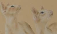 Sinchroniškos katės