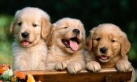 Šunyčiai