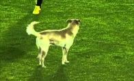 Įsiveržėlis šuo