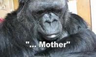 Gorilos irgi verkia