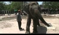 Šokantis dramblys