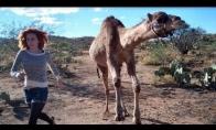 Lenktynės su kupranugariu