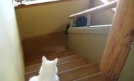 Baltojo katino laiptinė