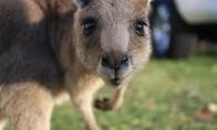 Masažiukas kengūriukui