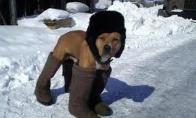 Rusiškas šuo