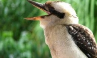 Dubstepo paukštis