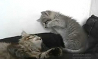Nejuokauk su Bruce Lee katinu!
