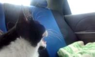 Pirmoji katino kelionė automobiliu