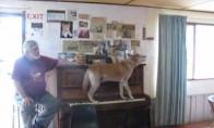 Pianistą suvalgęs šuo