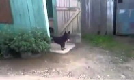 Šuniukas ir durys