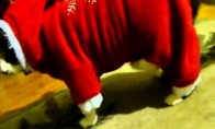 Santa katinas