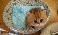 Kačiukas Kriketas