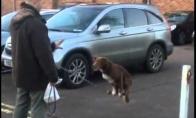 Šuo akrobatas