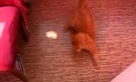 Katinas vs saulės zuikutis