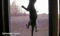 Kačių parkūras