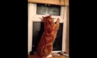 Pabėgėlė katė
