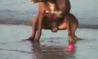 Nepaklusnus šunėkas